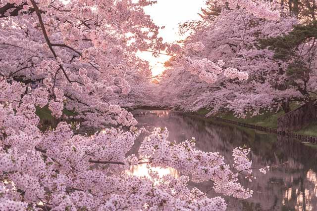 桜の便りと嬉しい知らせと